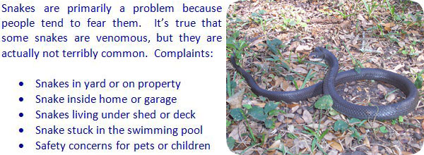 If you need snake help click on my nationwide list of snake removal